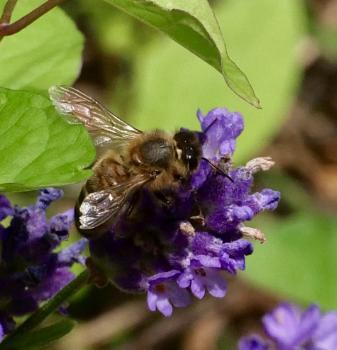 bee good to me