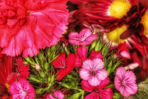 Flowers 2 by Merlin_k