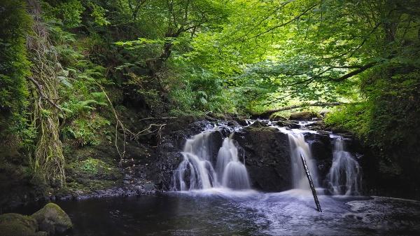 Glenariff forest - N.Ireland by atenytom