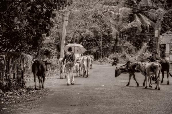 A Long Walk Home by sweetpea62