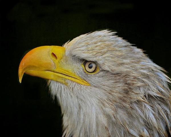 Beaky by sweetpea62