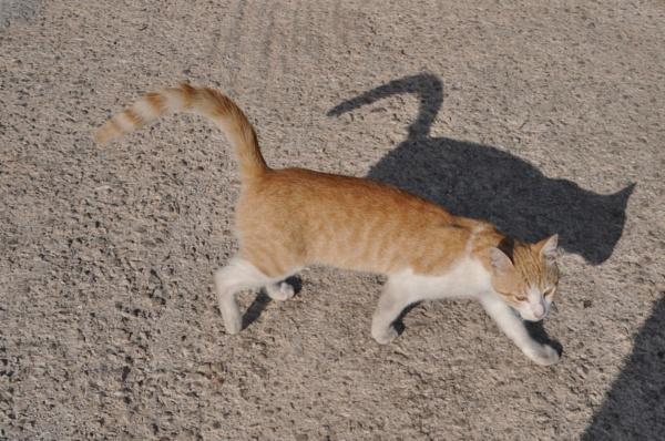 Catty shadows... by Chinga