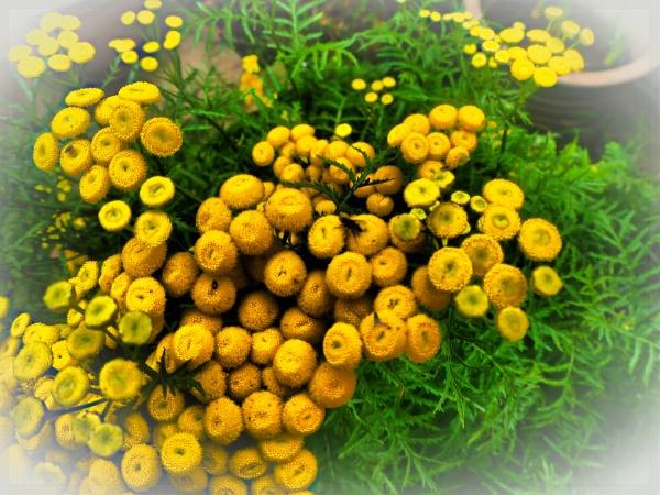YELLOW FLOWERS. by kojack