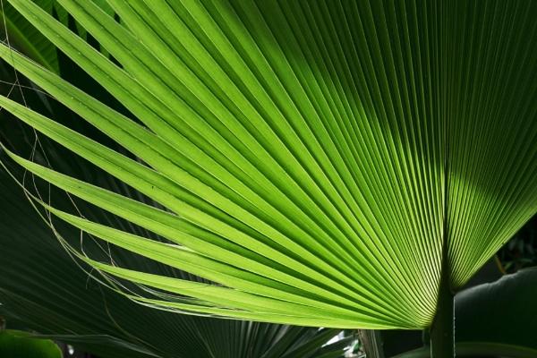 Green Light by manicam