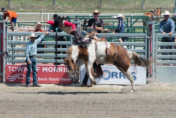 Saddle Bronc Riding by mmz_khan