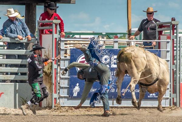 Bull Riding by mmz_khan
