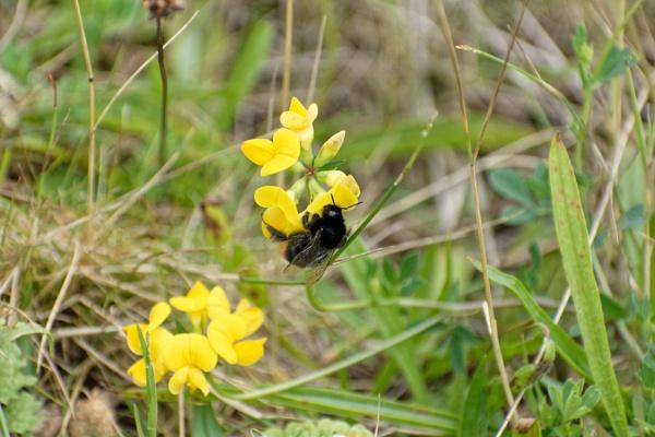Bee Hugger by protrekker1