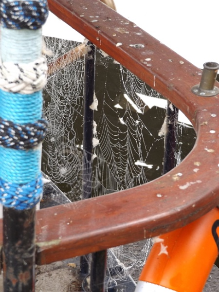 Cobwebs on a boat by JacquelineS