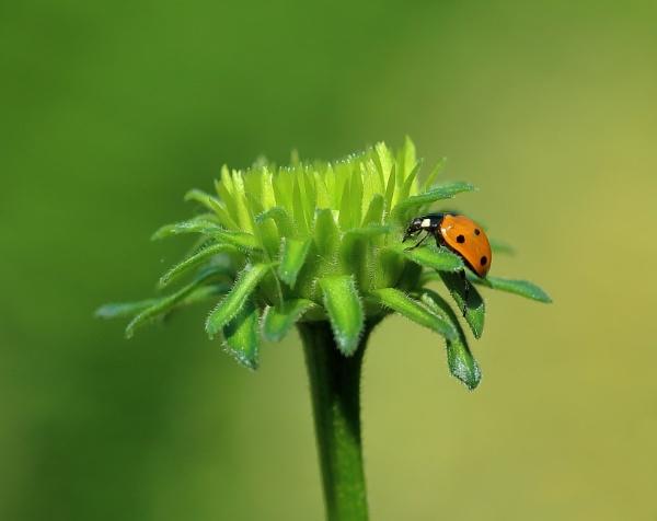 Ladybird by Juanita