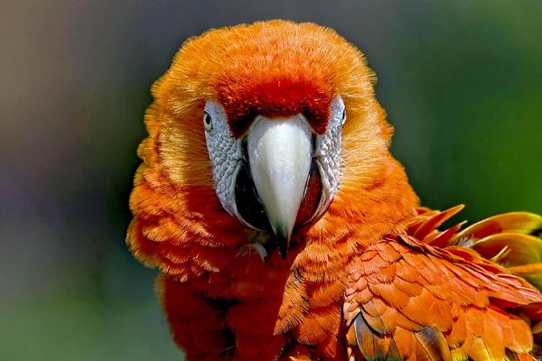 Pretty Polly by Photografer
