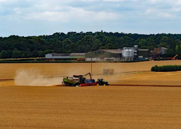 Harvesting by westside