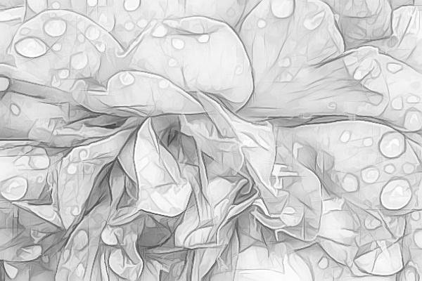 Raindrops on Roses by Joline
