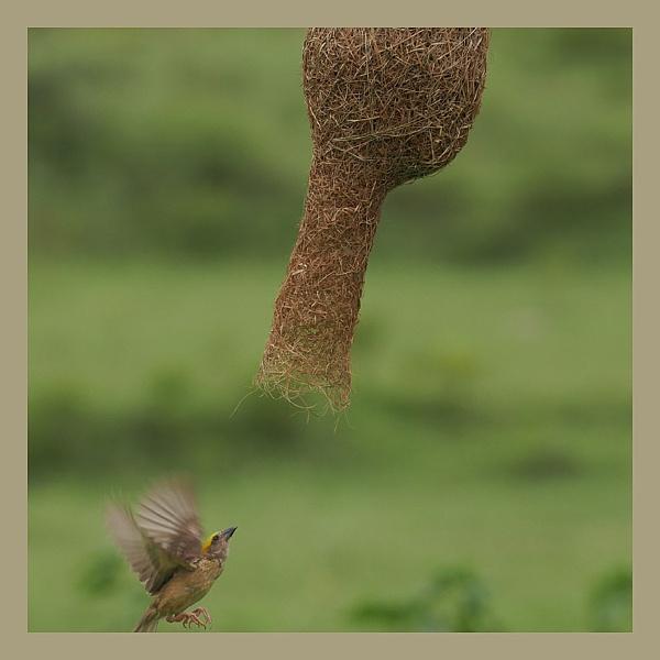 Action in Flight by prabhusinha
