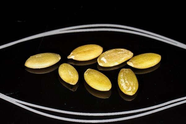 Seeds by Merlin_k
