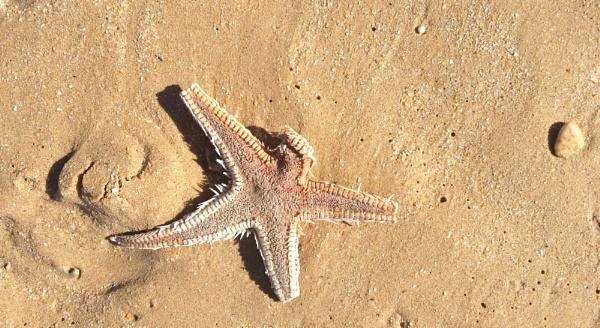 Beach finds ... by Chinga