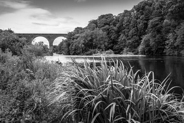 River Eden by mbradley