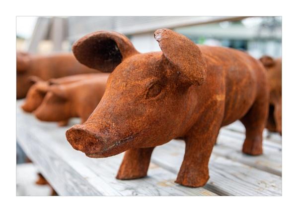 Little Piggies by DicksPics