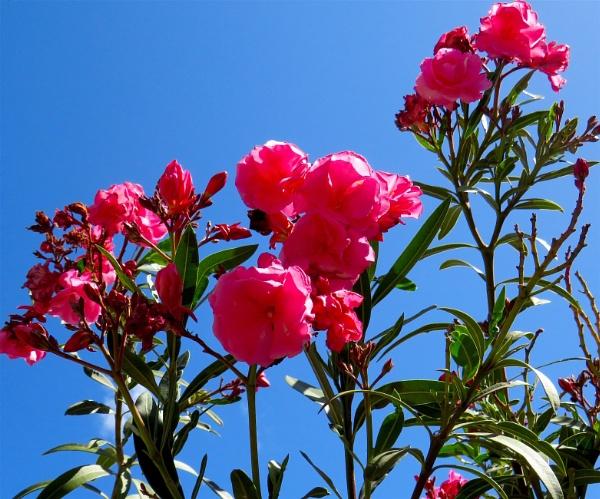 Blooms by ddolfelin