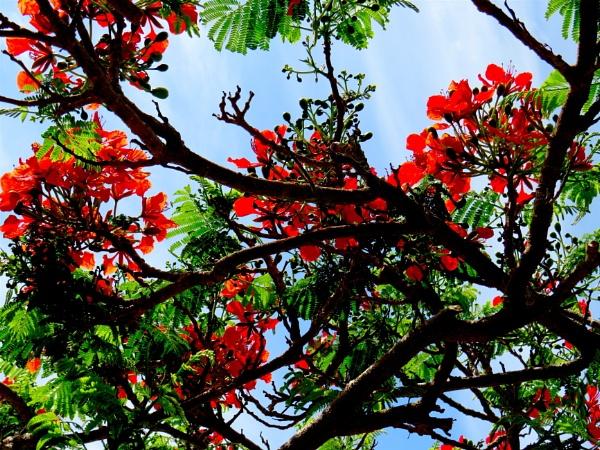 More Red Blooms! by ddolfelin