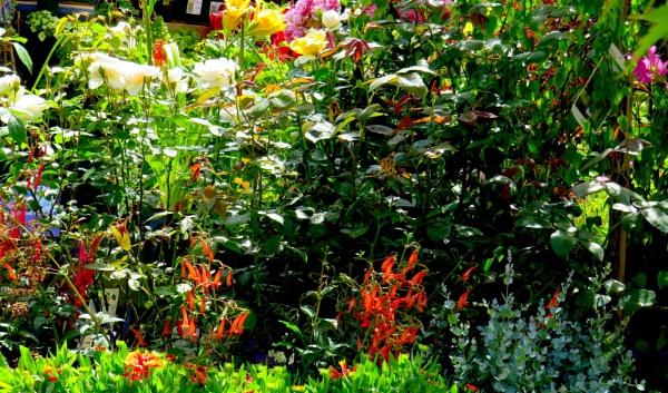 Garden Centre by ddolfelin
