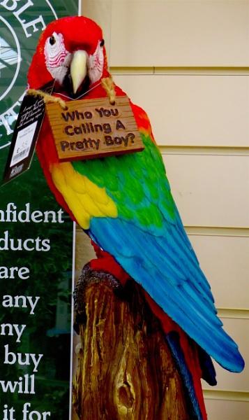 Silly Parrot by ddolfelin