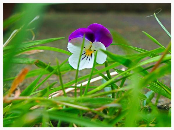 LITTLE FLOWER. by kojack