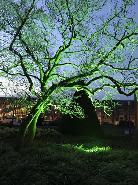 Green Tree by Tony0062