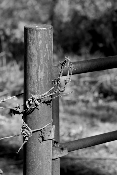 BarbedWire by mike35420