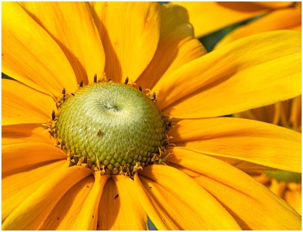 Summertime by capto