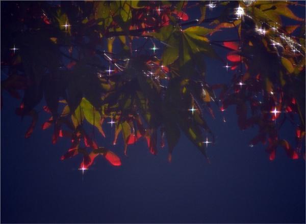 stars by carmenfuchs