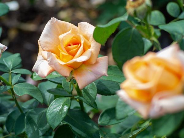 HP_FLOWERS01 by AgeingDJ