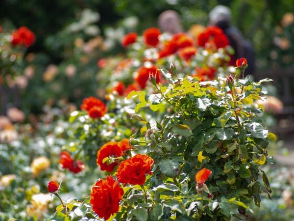 HP_Flowers02 by AgeingDJ