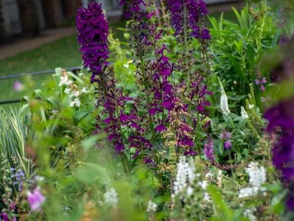 HP_Flowers09 by AgeingDJ