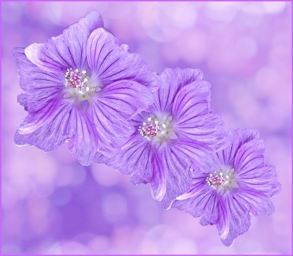 "\""Triple Bloom\"". by adrianedwa"