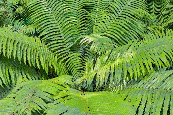 Green fern in the forest by LotaLota