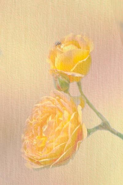 Yellow roses by SueLeonard