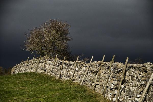 Yorkshire Wall & Tree by Zydeco_Joe