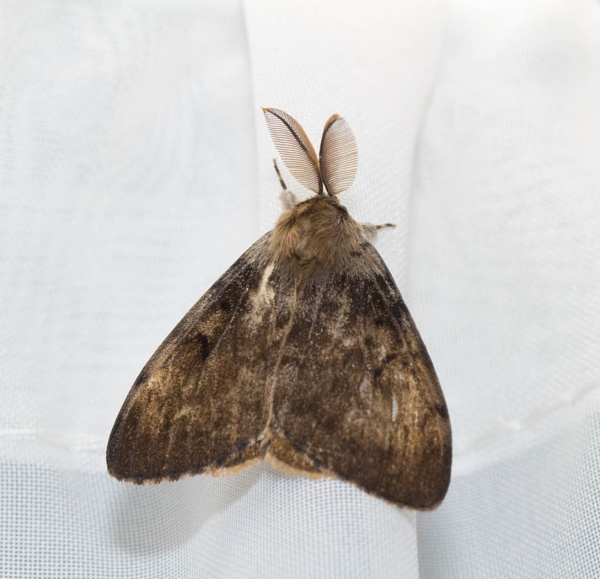 Moth by Squirrel