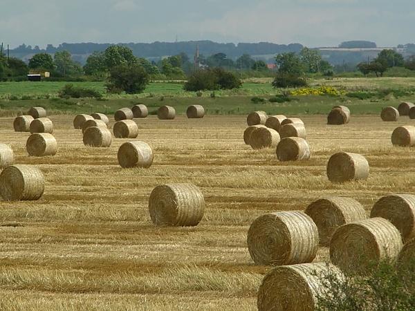 Bales of Hay II by skennedy