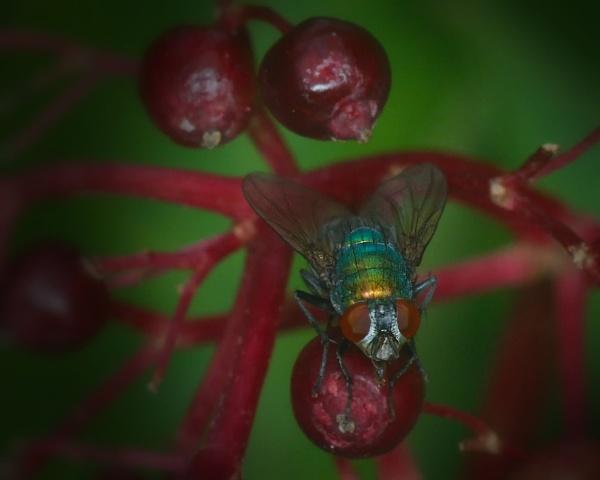 Elder Fly by bobby55