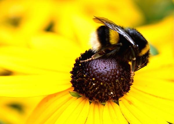 Break  in  bumble  bee by oldham