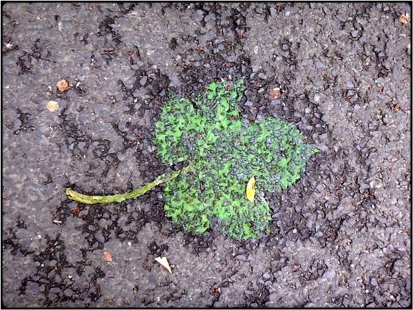 green leaf by FabioKeiner