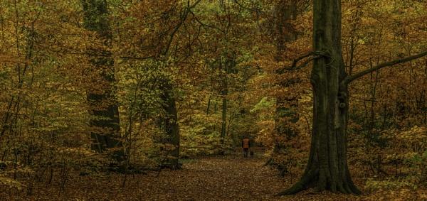 Autumn walk by acesnapper
