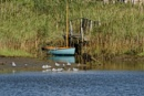 Swallows & Amazons? no just a blue dingy on the Yar guarded by Seagulls! by simmo73