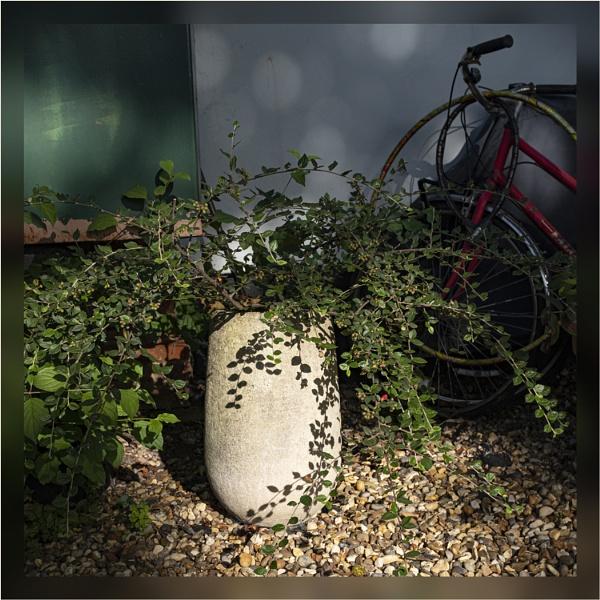 Back Yard Shadows by AlfieK