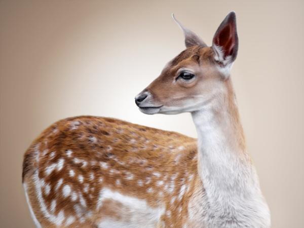 Oh, My Deer by Durante