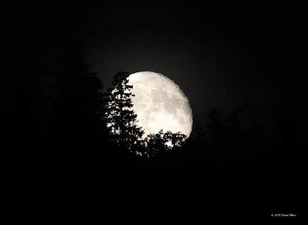 Tonight\'s Moon Rise 93.5% Illuminated by youcantoo