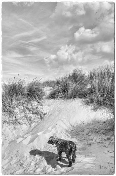 Charlie on the Beach by MAK2
