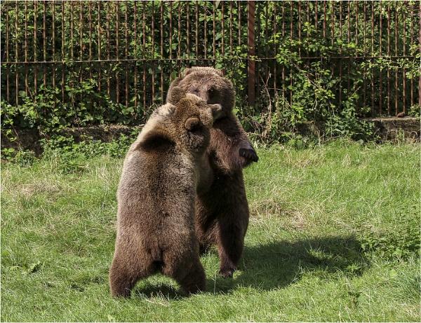 Bear Hug by AnnetteK