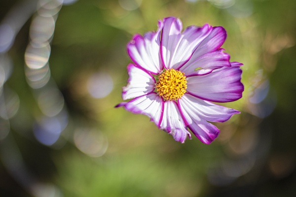 Flower and lights.2 by frenchie44